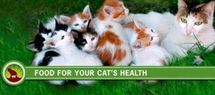 Корм Holistic Blend для кошек